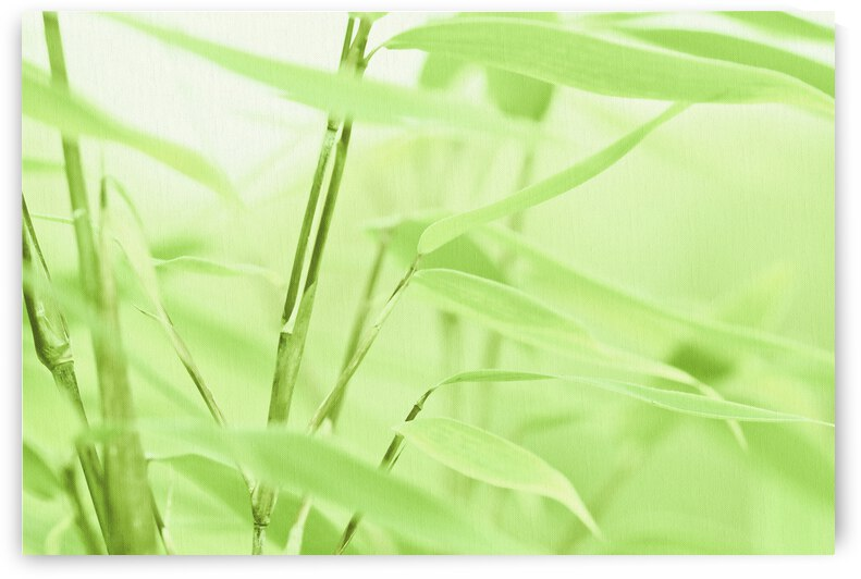 Bamboo Leaf   by Gabi Siebenhuehner