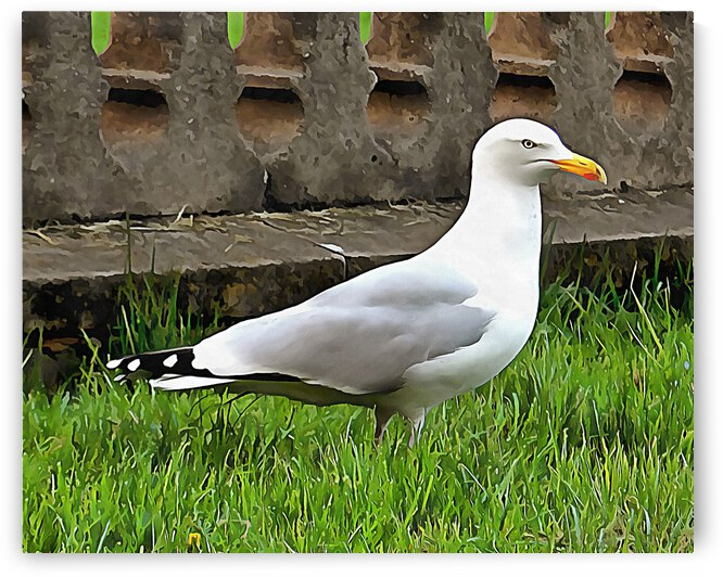 Brighton Seagull by Dorothy Berry-Lound
