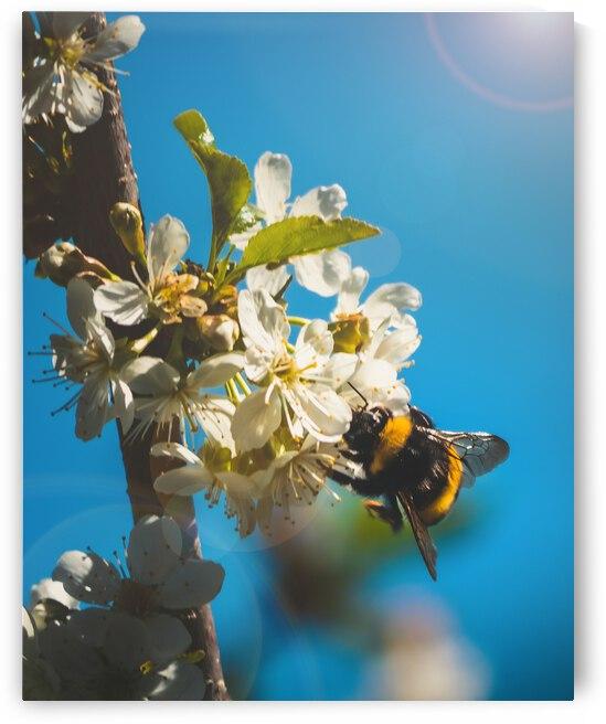 Bumble Cherry by Bone Photo