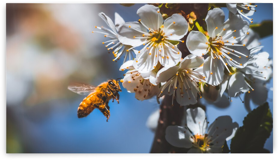 Blossom & The Bee by Bone Photo