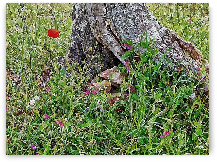 Rocks In The Bottom Of An Old Olive Tree by Dorothy Berry-Lound