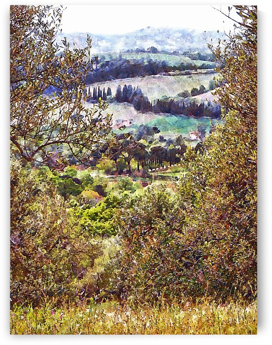 Through The Gap In The Olive Trees by Dorothy Berry-Lound