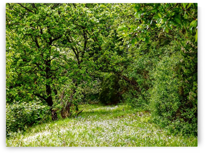 Up My Garden Path by Dorothy Berry-Lound