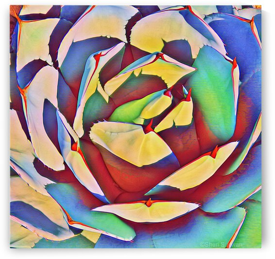 Multicolored Agave I by Sheri Schwan