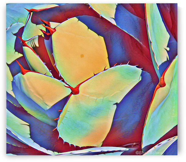 Multicolored Agave II by Sheri Schwan
