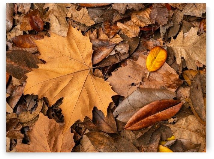 Autumn Foliage by Sebastian Schuster