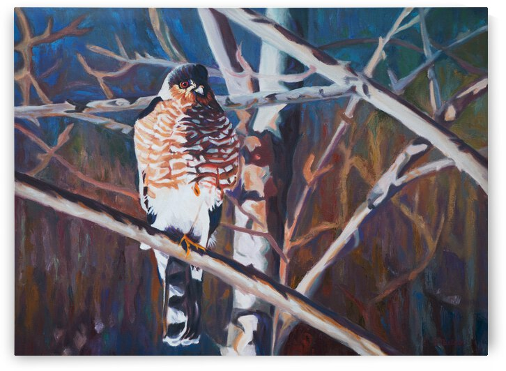 Coopers Hawk by Sherry Nielsen