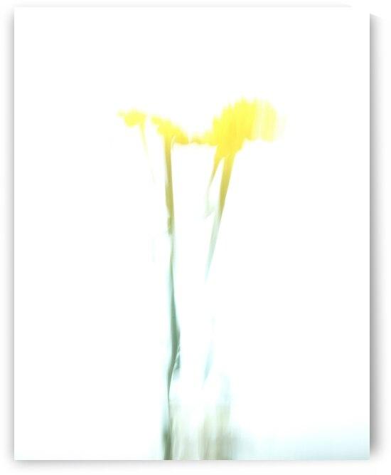 Gerbera Daisy Abstract 5 by Leslie K Joseph