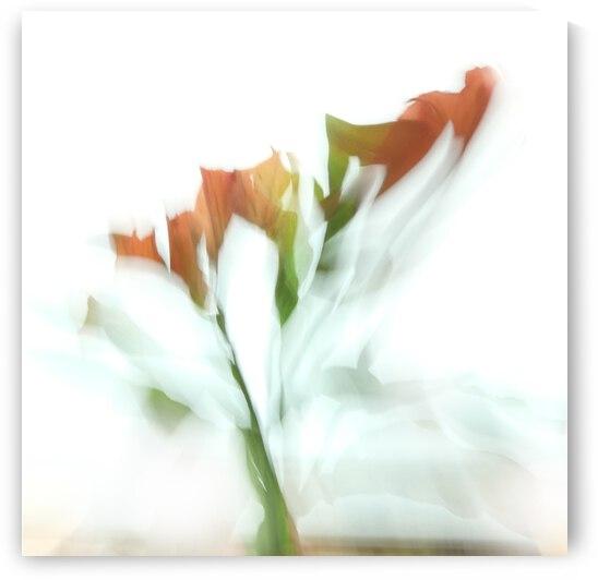 Gerbera Daisy Abstract 2 by Leslie K Joseph