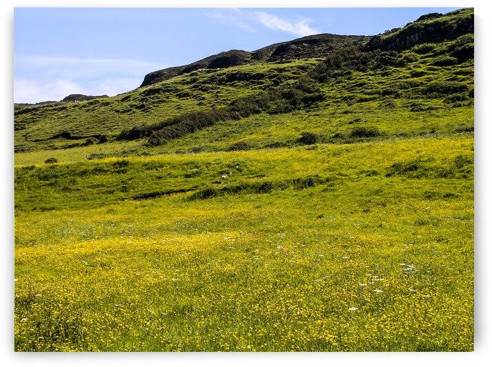 Flowery Field by Andre Luis Leme