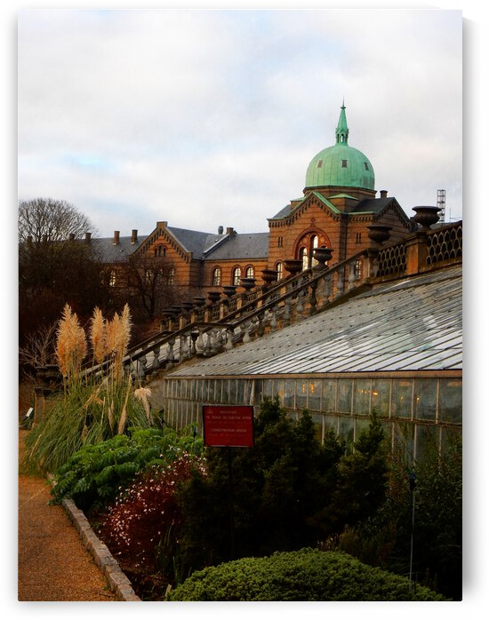 Botanic Garden Contrasts by Dorothy Berry-Lound