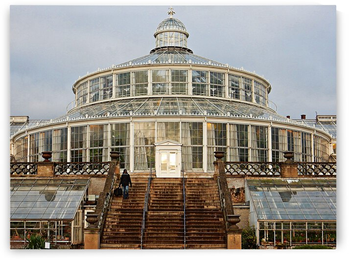 Palm House Close Up Copenhagen by Dorothy Berry-Lound