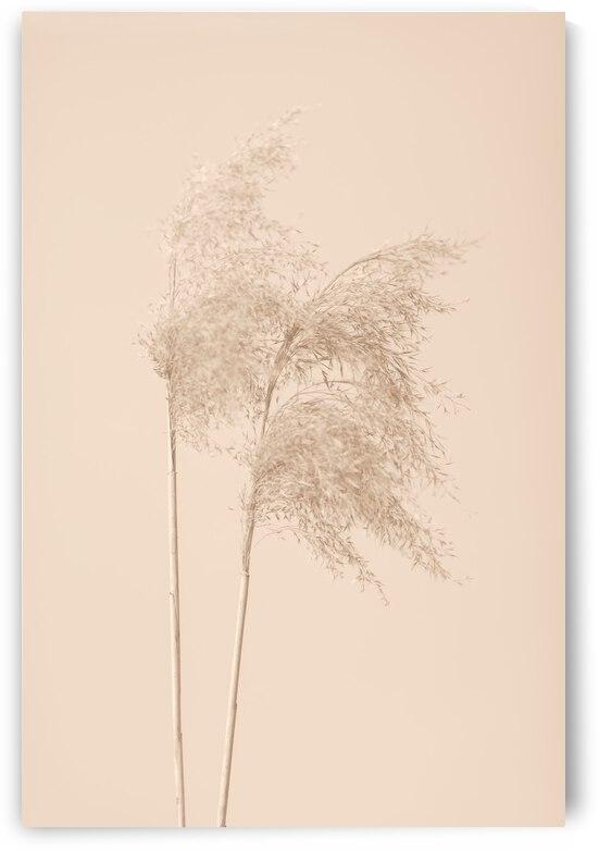 Reed Grass Beige 02 by 1x
