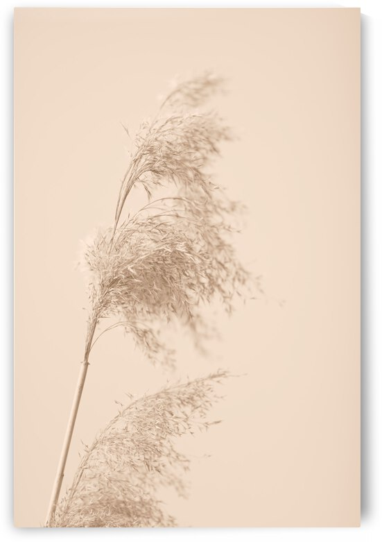 Reed Grass Beige 03 by 1x