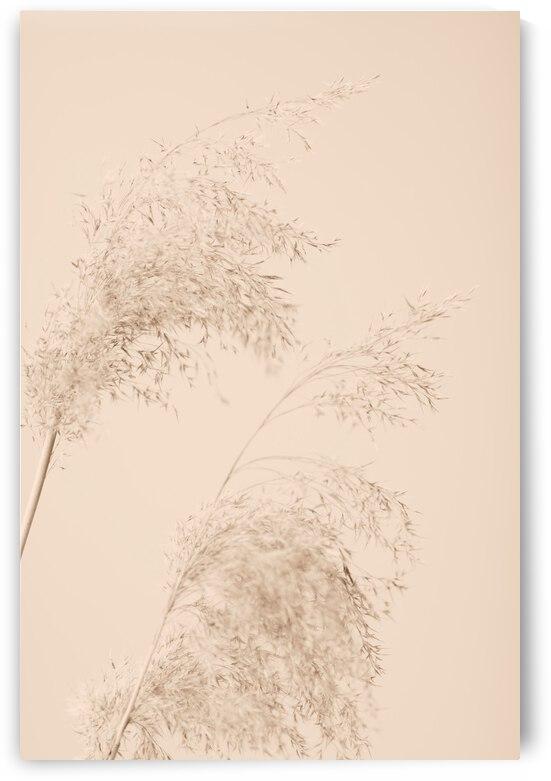 Reed Grass Beige 06 by 1x