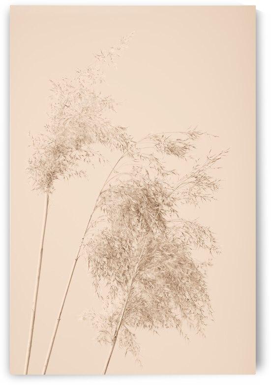 Reed Grass Beige 07 by 1x
