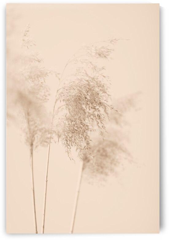 Reed Grass Beige 09 by 1x