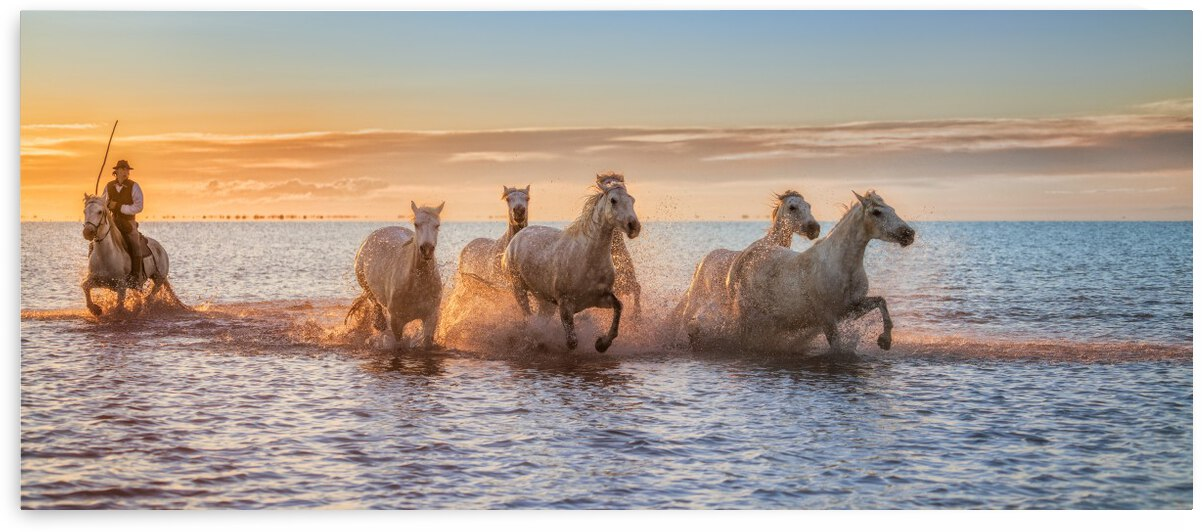 Camargue Horses II by 1x