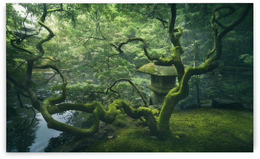 Japanese Tree by 1x