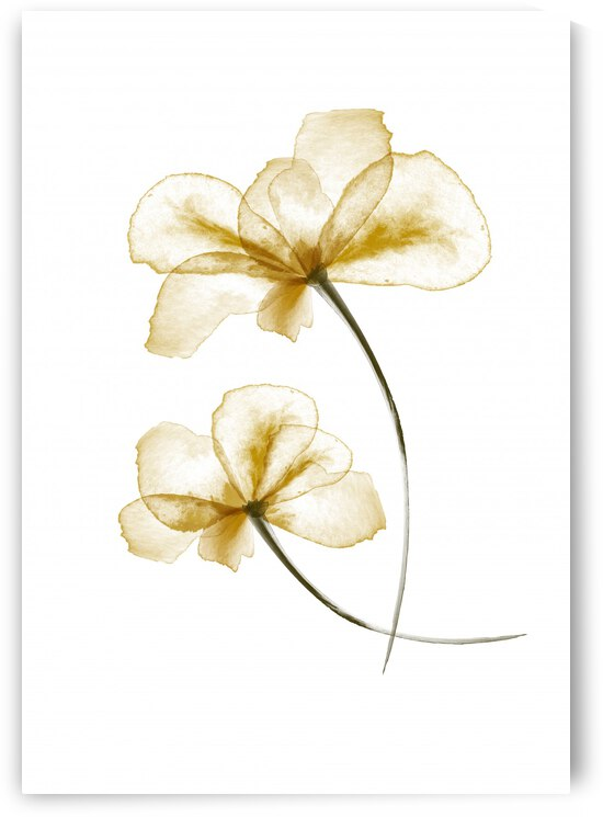 Pressed Flowers by 1x