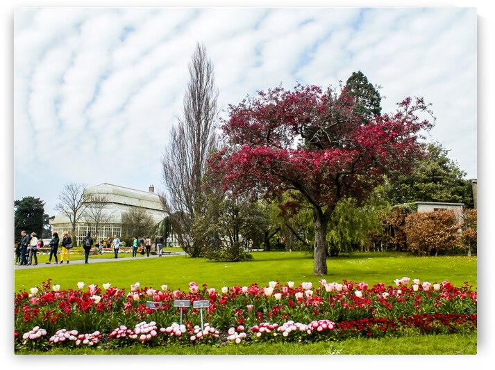 Botanic Garden by Andre Luis Leme