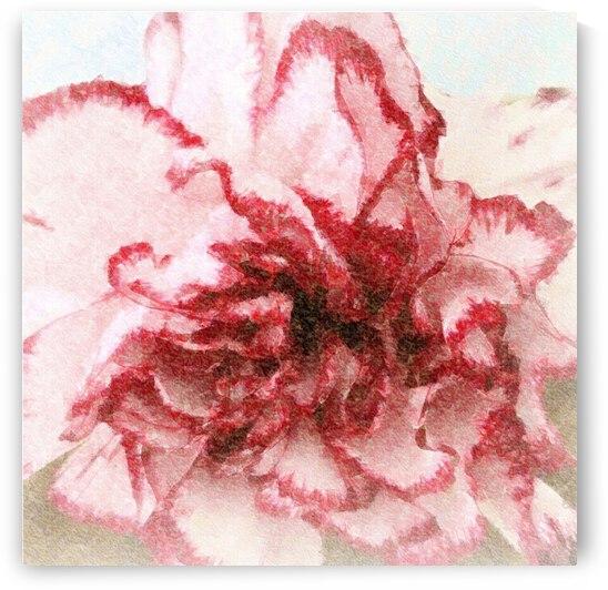 Carnation Soft by Ellen Barron O-Reilly