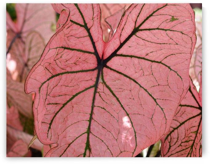 Pink Foliage Photograph by Katherine Lindsey Photography
