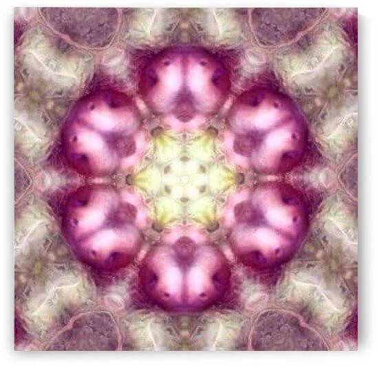 Pink Flower Mandala by Jenn Rosner