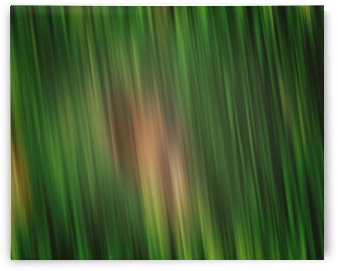 Blades Of Grass 2 by Jenn Rosner