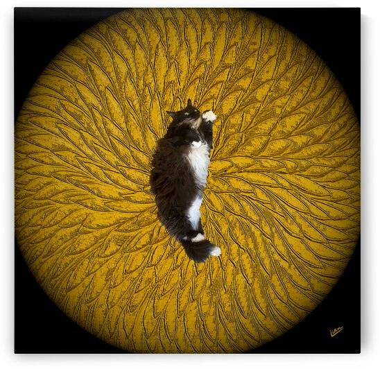 Cats Eye by Liam David