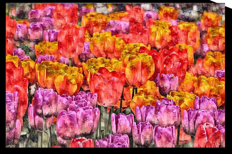 Tulips at Roozengaarde by Barbara Treen