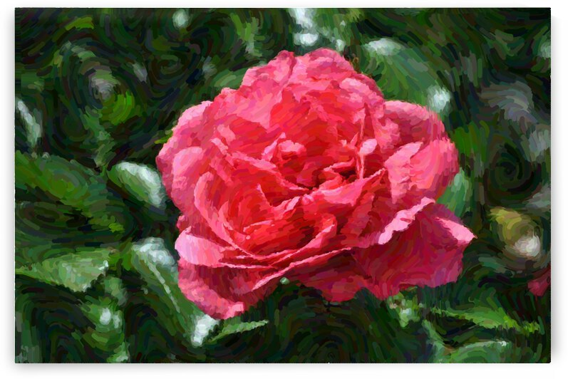 Red Rose by Barbara Treen