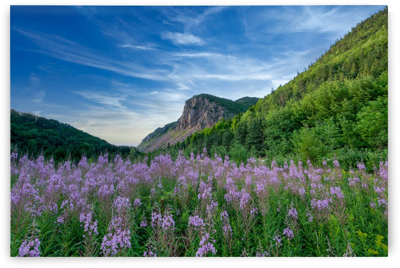 Fireweed at La Grand Falaise by Michel Soucy