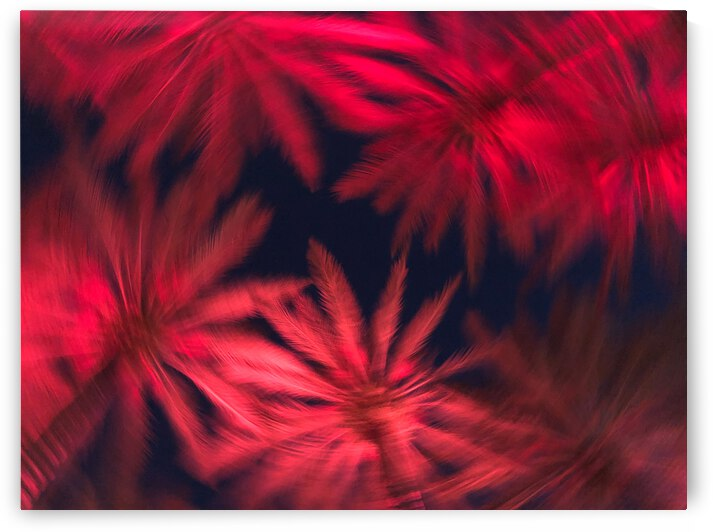 Electric Palm - Red Spin by The Moment Rocks