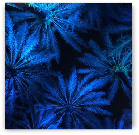 Electric Palm - Blue Square by The Moment Rocks