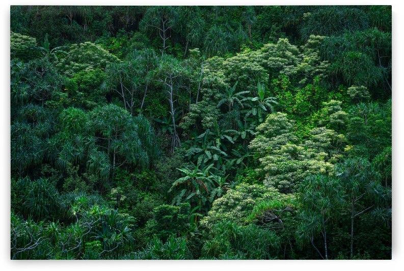 Kauai Forest by BCALI