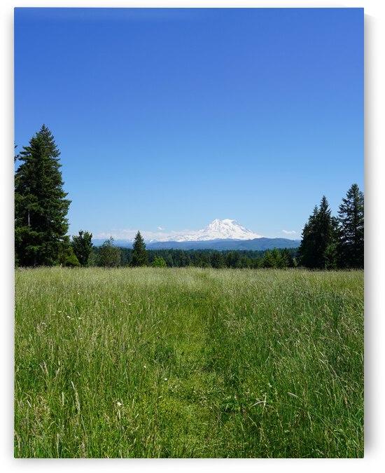 Mount Rainier Pacific Northwest United States by 24