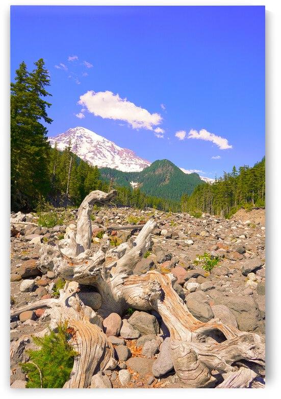 Sun Bathed Mount Rainier Cascades Mountain Range Pacific Northwest Washington by 360 Studios