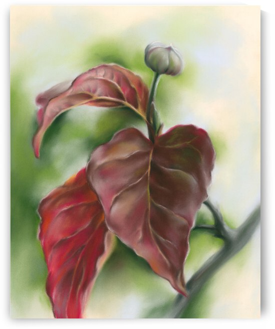 Red Autumn Dogwood Leaves and Bud by MM Anderson