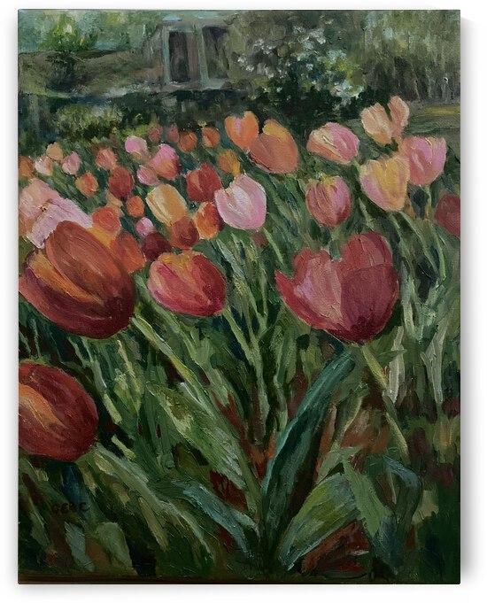 Tulips  by Cene