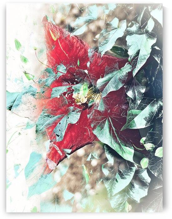 Scarlett Pimpernel with Vine by BotanicalArt ca