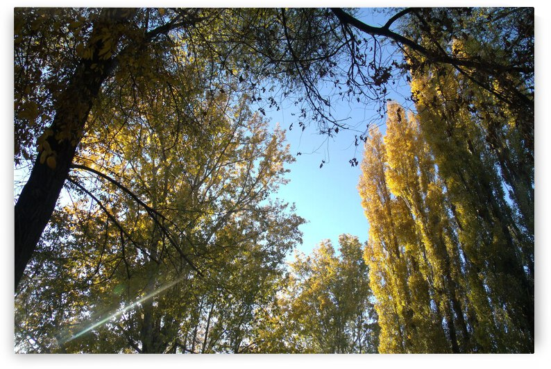Falls Trees In October 9 by Sherrie Larch