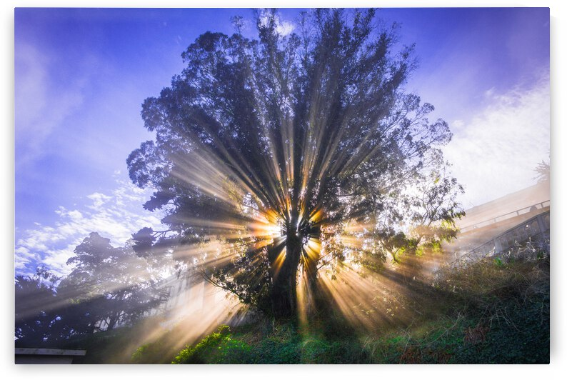 Rays of Light by WOW Factor Photography
