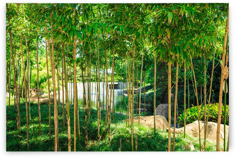 Bamboo by WOW Factor Photography