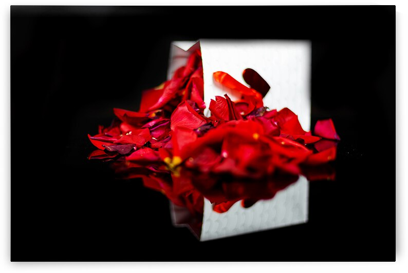 Rose Petals by WOW Factor Photography