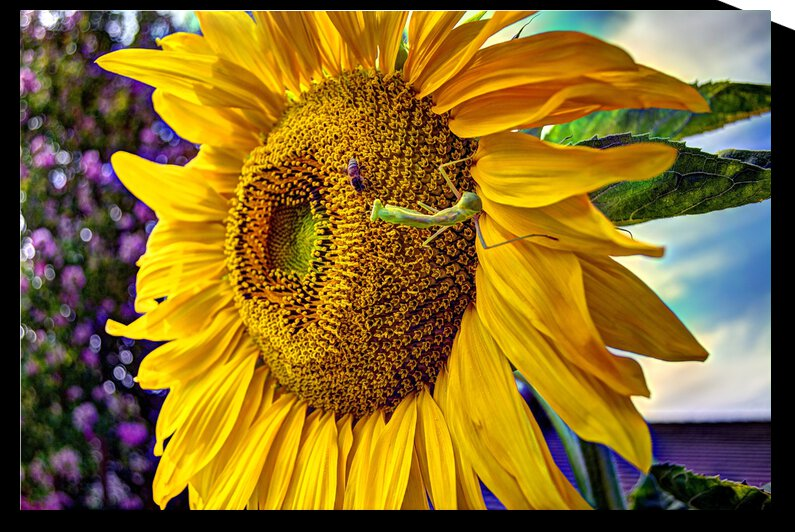 Sunflower Creative by WOW Factor Photography