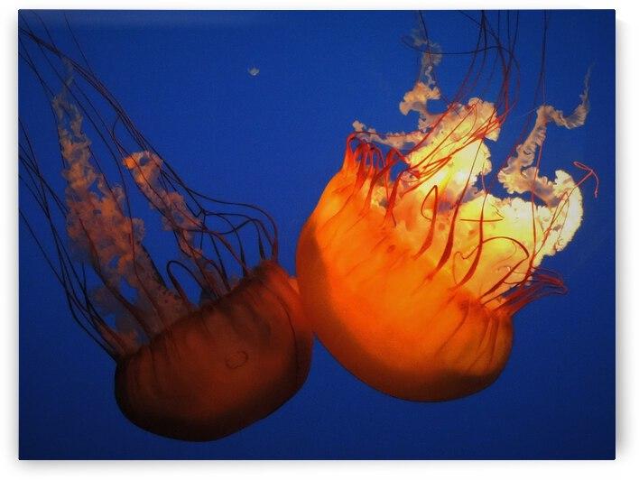 Jellies by Stephanie Driscoll