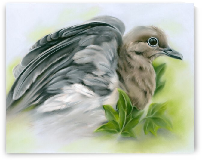 Mourning Dove Flexing Wings with Ivy by MM Anderson