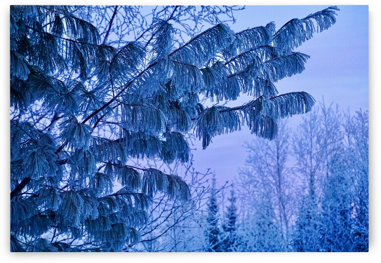 Frosted Pastels by J Gilbert Photography