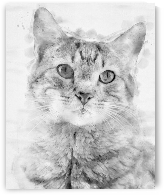 Kitten Noir by Bob Orsillo